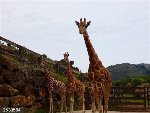 Alto Campoo, Cabárceno y Fuente Dé reciben más de 24.100 visitas en el Puente de diciembre
