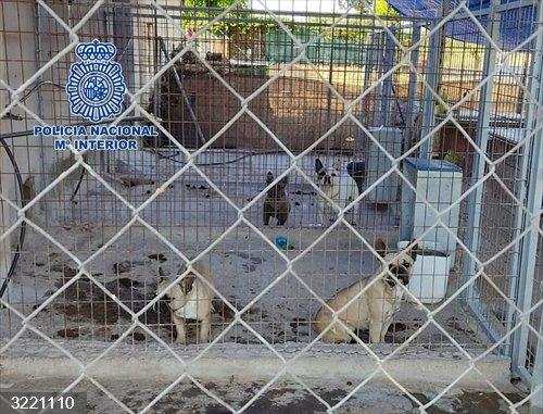Sucesos.- Desmantelado en Don Benito un criadero ilegal de perros en