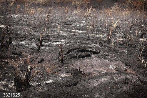 Disminuyen de los incendios forestales observados en África Central