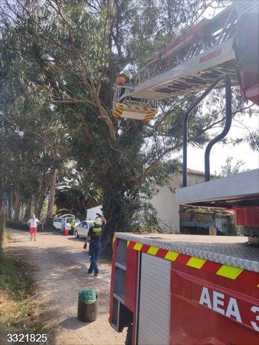 Bomberos rescatan un gato subido a un eucalipto de gran altura en Laredo