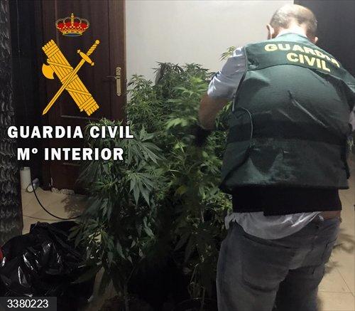 Almería.- Sucesos.- Un detenido y desmantelado un cultivo de 63 plantas de marihuana en una vivienda de Roquetas
