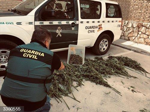 Córdoba.- Sucesos.- Detenido tras desmantelarse una plantación de marihuana en su vivienda en Palenciana