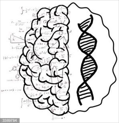 Cómo la variación genética da lugar a diferencias en la capacidad matemática del cerebro.<br>REMITIDA / HANDOUT por MICHAEL A. SKEIDE, 2020 <br>Fecha: 22/10/2020.                 <br>Fotografía remitida a medios de comunicación exclusivamente para ilustrar la noticia a la que hace referencia la imagen, y citando la procedencia de la imagen en la firma